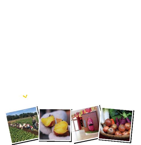 らぽっぽファームが誇る日本一美しいさつまいも畑で日本一のさつまいもを収穫し世界一の記録をつくろう!