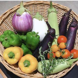 なめファ夏野菜収穫体験